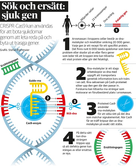 En sax för gener kan få Nobelpris - bild 5A Grafik_CRISPR1
